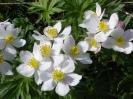 Blumen_11