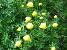 Blumen_12