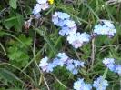 Blumen_21