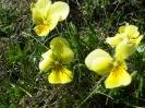 Blumen_4