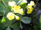 Blumen_7